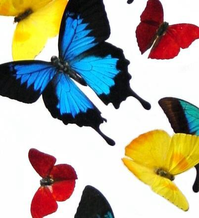 color sweep of butterflies